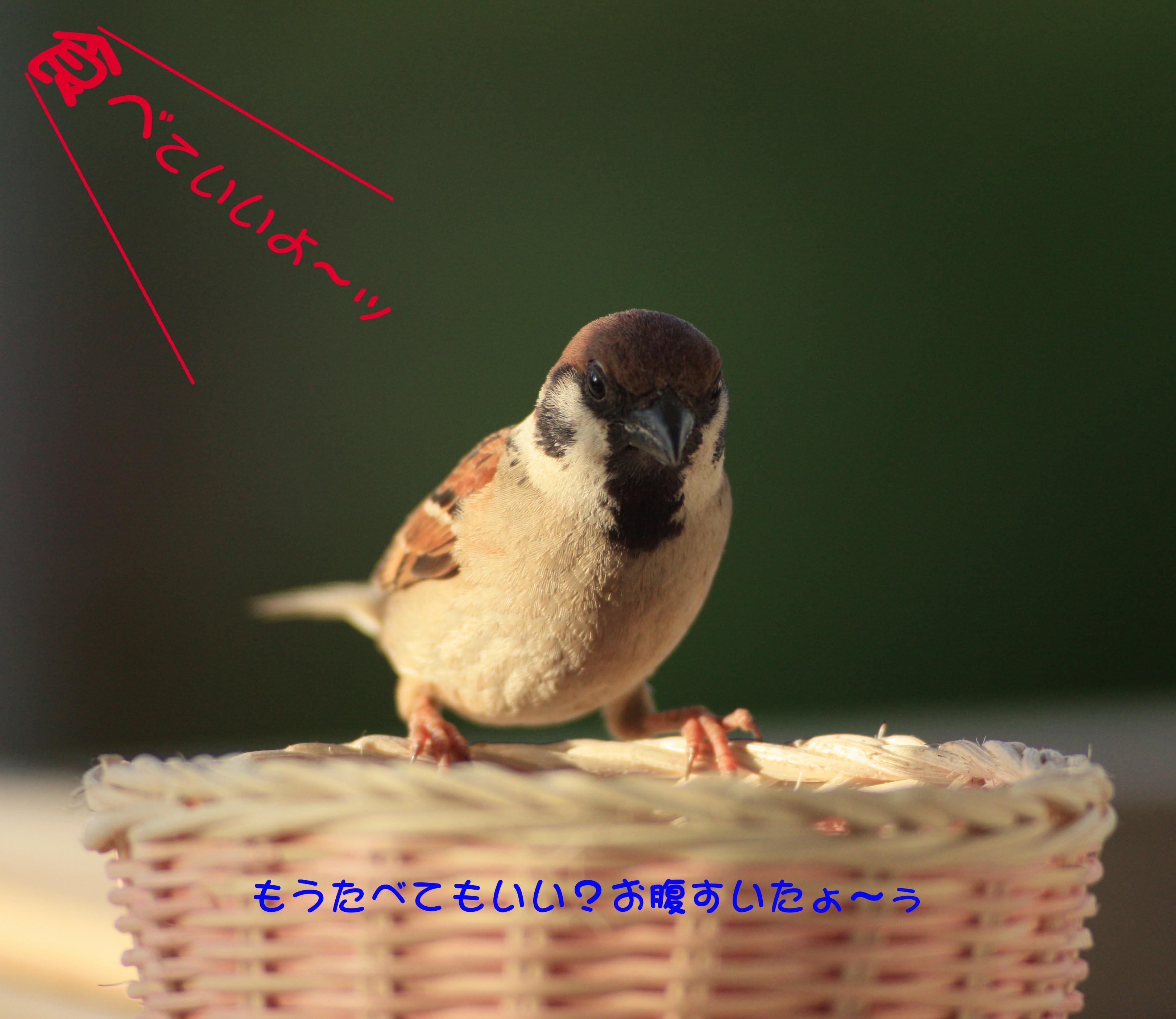 f0215767_16401625.jpg