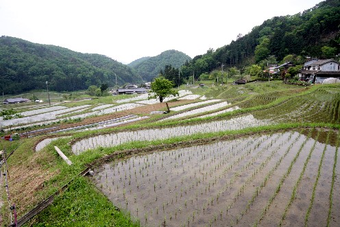 毛原の棚田、雨を待つ水田 (京都)_b0067283_1181164.jpg