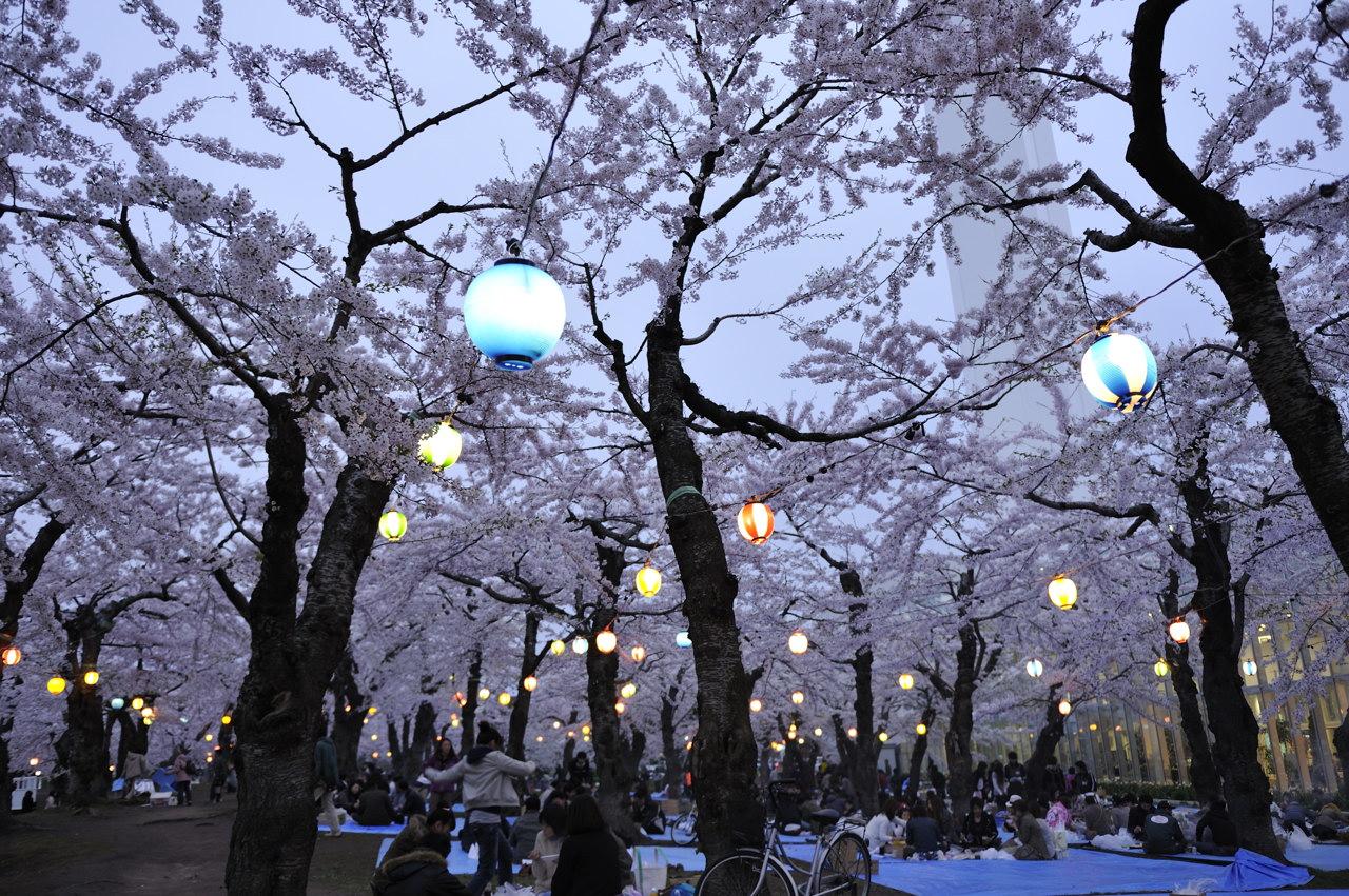 函館桜 宴(うたげ)_e0171886_1941686.jpg