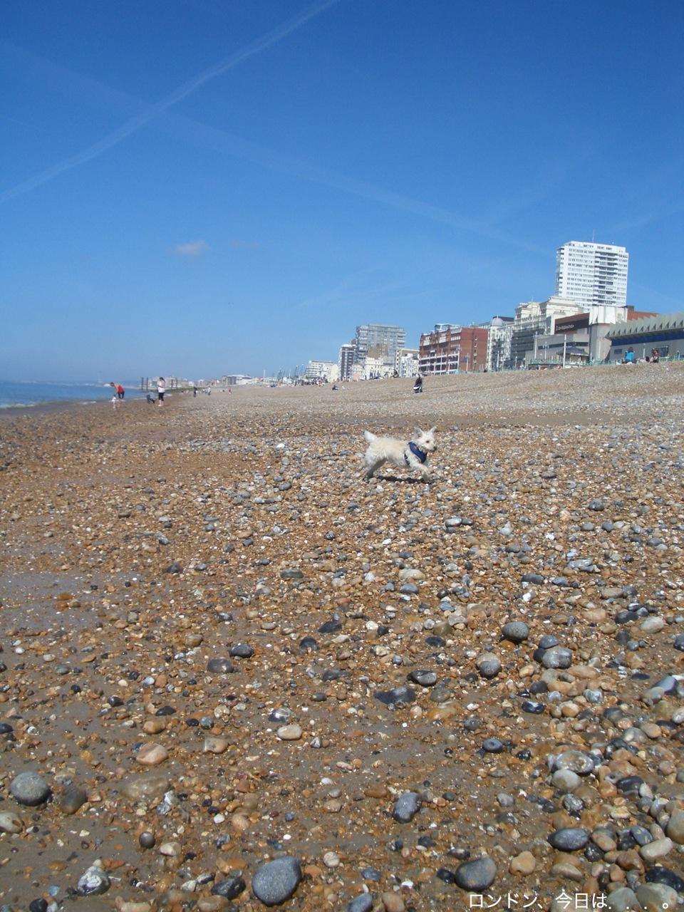 海辺の町、ブライトン_a0137487_204439100.jpg