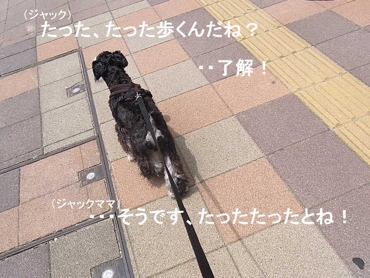 d0160791_1012158.jpg