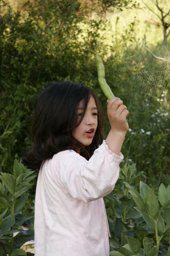 ソラマメの収穫~5月の畑_f0106597_17323995.jpg