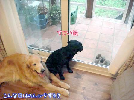 お預り_f0064906_1965644.jpg