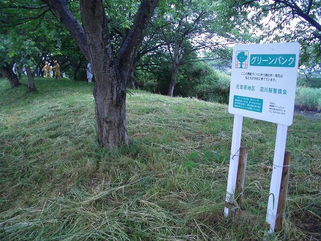 元吉原地区の底力! 沼川サクラ並木の草刈り清掃_f0141310_2338429.jpg