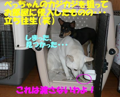 f0121712_1726199.jpg