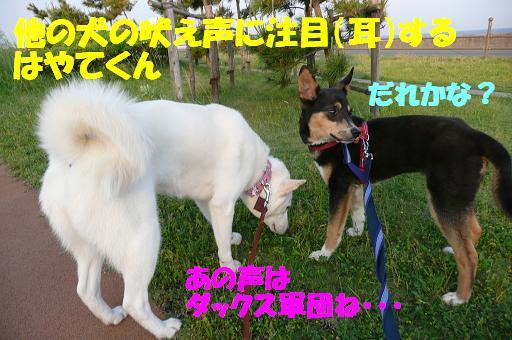 f0121712_1730446.jpg
