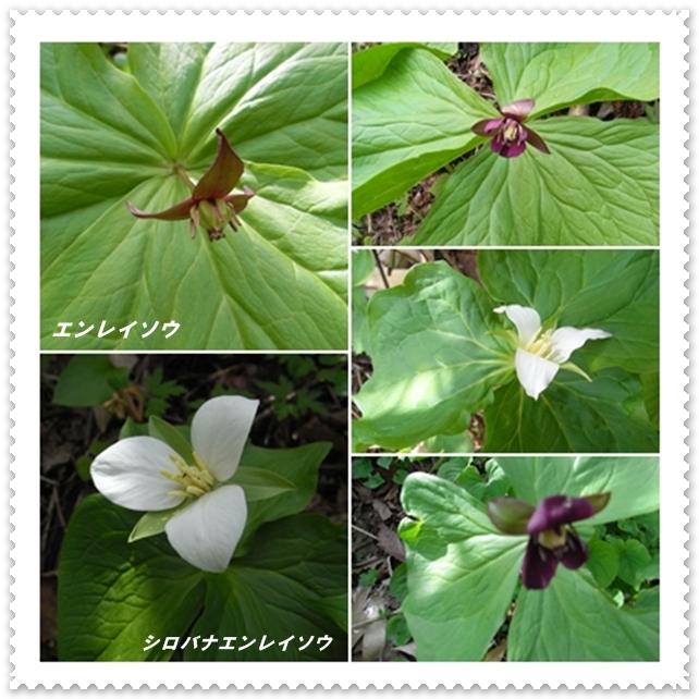 函館山_c0073015_18502960.jpg