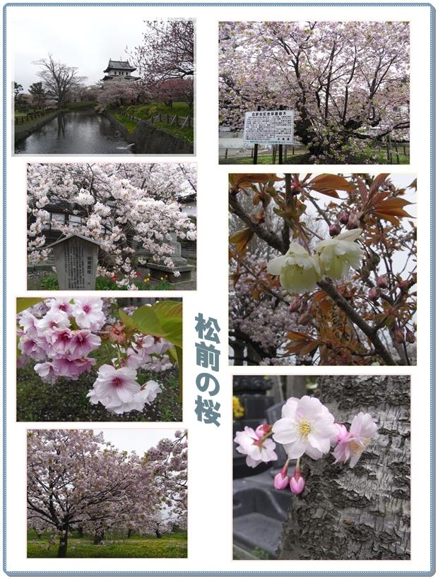 松前の桜_c0073015_2222444.jpg