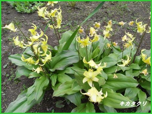 松前の桜_c0073015_2250446.jpg