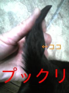 f0148927_16364656.jpg