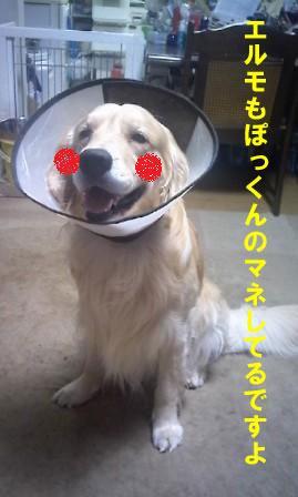f0176830_22184636.jpg