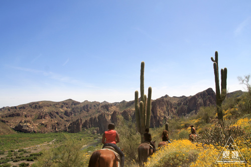 045 Tonto National Forest ~初の乗馬~_c0211532_11535255.jpg