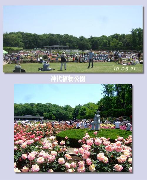 神代植物公園1