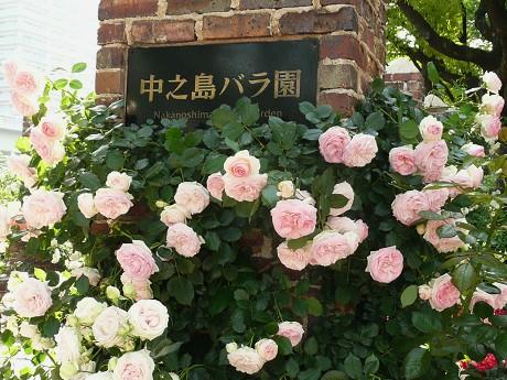 中之島バラ園_c0057946_20102767.jpg