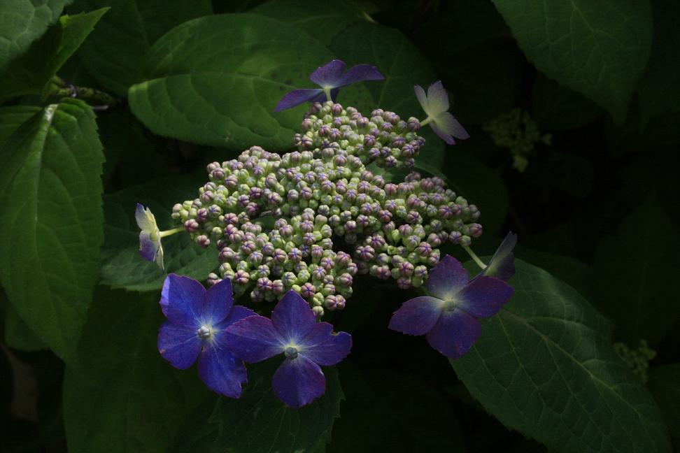 澄んだ花をツマミに、澄んだお酒を!_a0107574_2125993.jpg