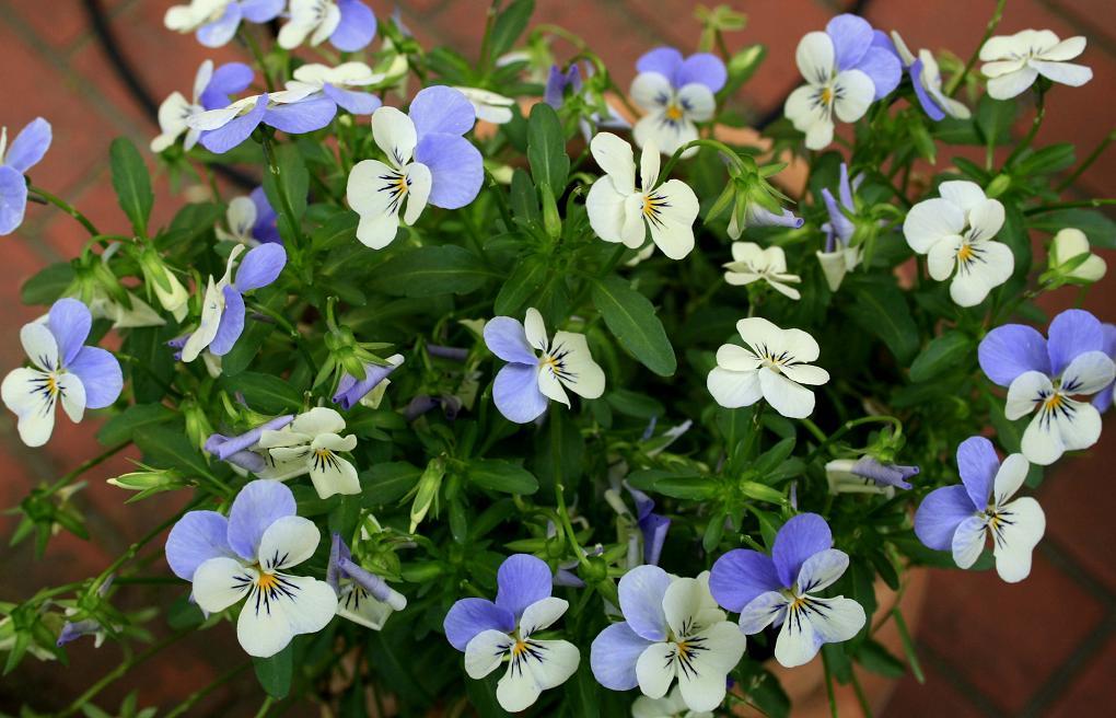澄んだ花をツマミに、澄んだお酒を!_a0107574_21282838.jpg