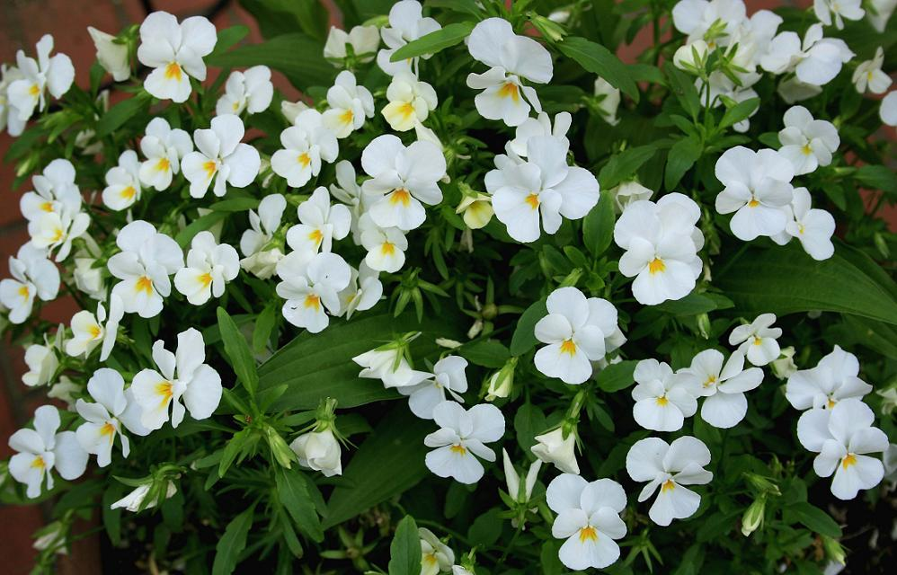 澄んだ花をツマミに、澄んだお酒を!_a0107574_21283744.jpg