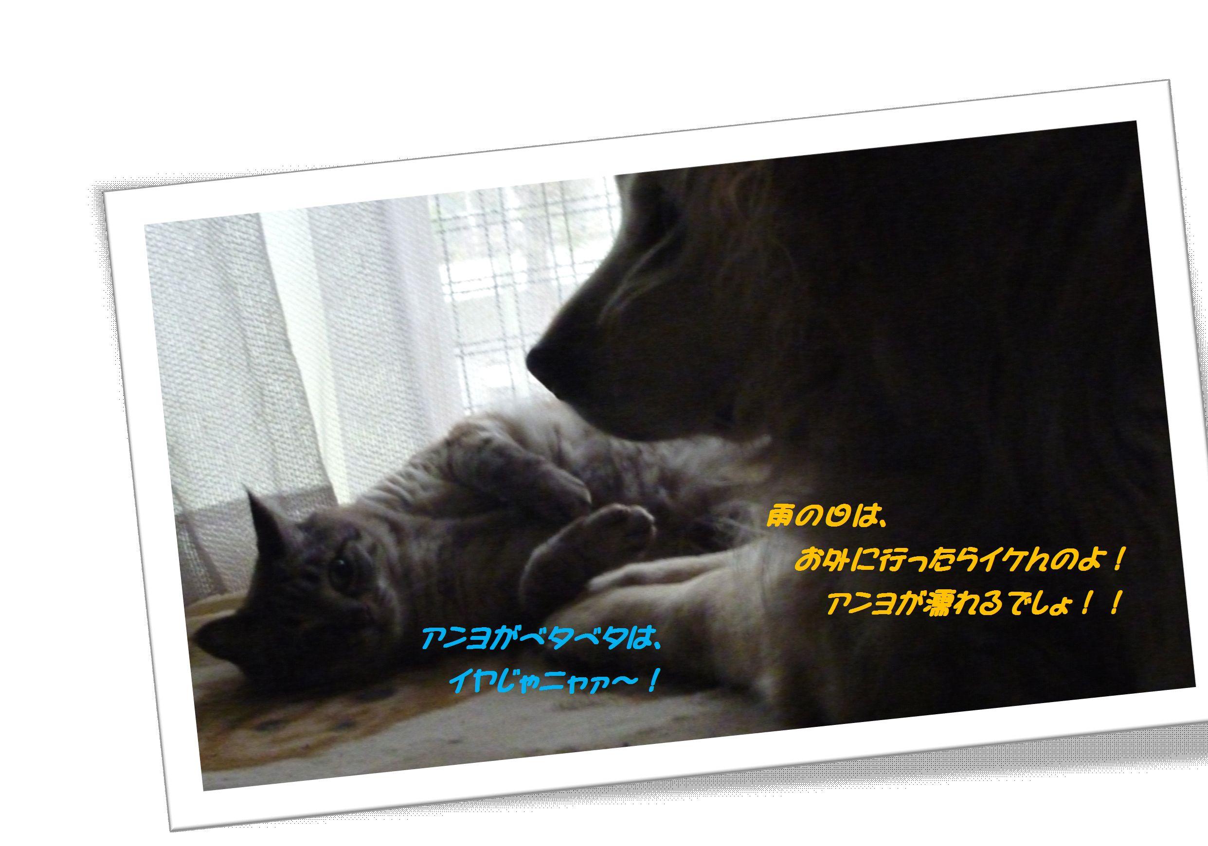 a0034382_226541.jpg