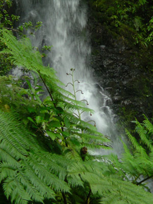 水ほとばしる嘉入の滝_e0028387_23295925.jpg