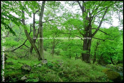 久しぶりの森林浴_d0140490_21264448.jpg