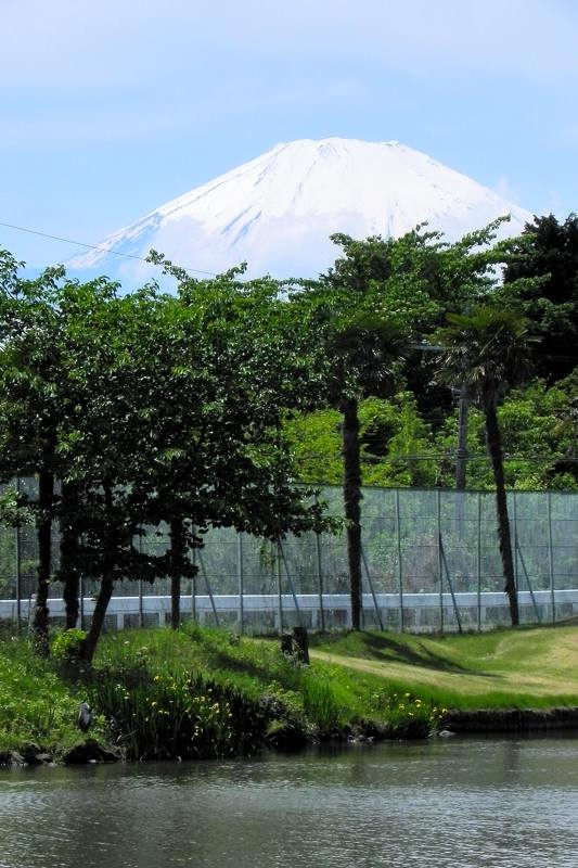 富士山は雄大です/黄色・赤色は難しい_b0024798_5582980.jpg