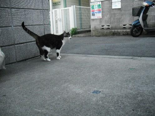 『がんばる猫』も5年です_d0053201_23472087.jpg