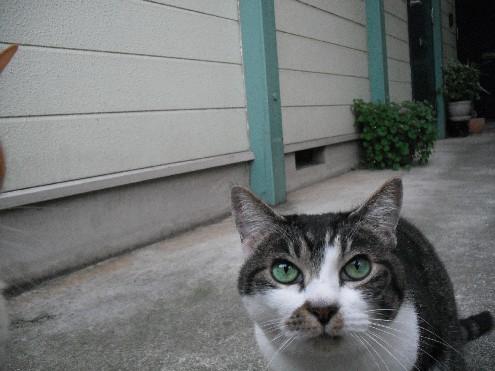 『がんばる猫』も5年です_d0053201_23473498.jpg