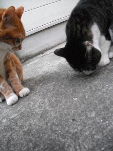 『がんばる猫』も5年です_d0053201_23474287.jpg