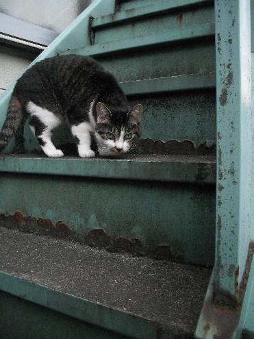 『がんばる猫』も5年です_d0053201_23475576.jpg