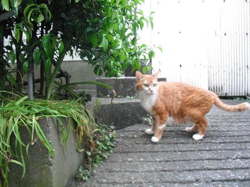 『がんばる猫』も5年です_d0053201_23481088.jpg