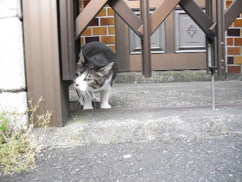 『がんばる猫』も5年です_d0053201_23482515.jpg