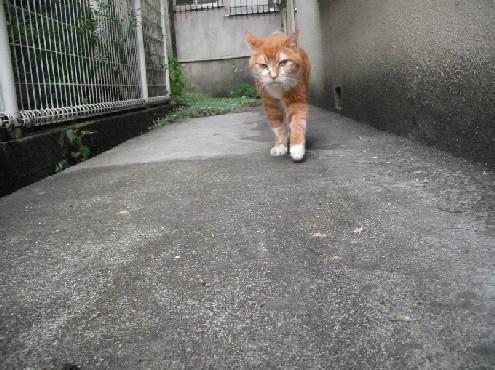 『がんばる猫』も5年です_d0053201_23483254.jpg