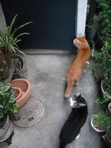 『がんばる猫』も5年です_d0053201_23483917.jpg