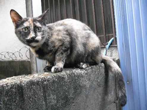 『がんばる猫』も5年です_d0053201_2349099.jpg