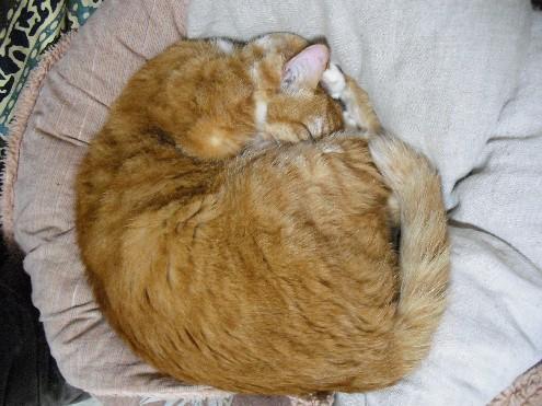 『がんばる猫』も5年です_d0053201_234976.jpg