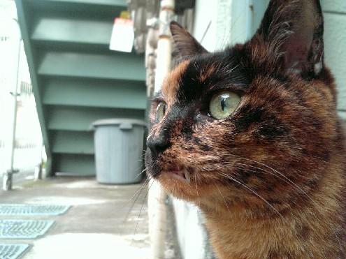 『がんばる猫』も5年です_d0053201_23532967.jpg