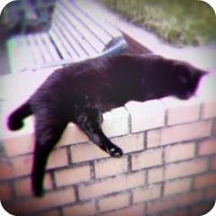 黒猫の眠り_f0235201_2245165.jpg