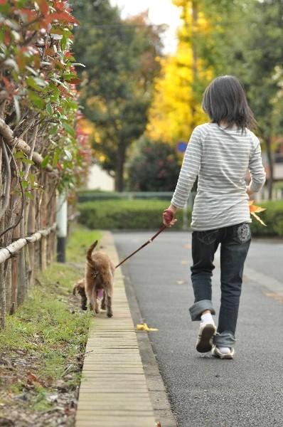 将来への道_b0181516_22484299.jpg