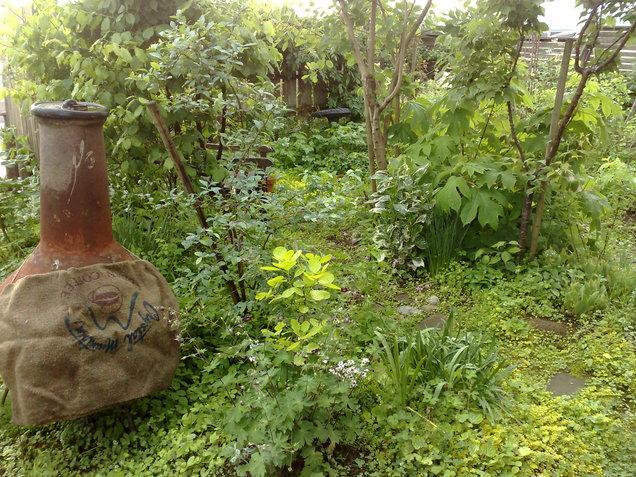 今朝の庭_b0132338_6305382.jpg