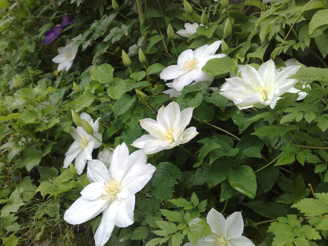 今朝の庭_b0132338_6311993.jpg