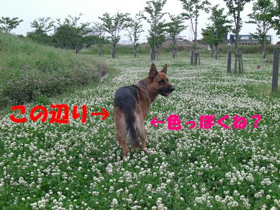 c0192541_2275430.jpg