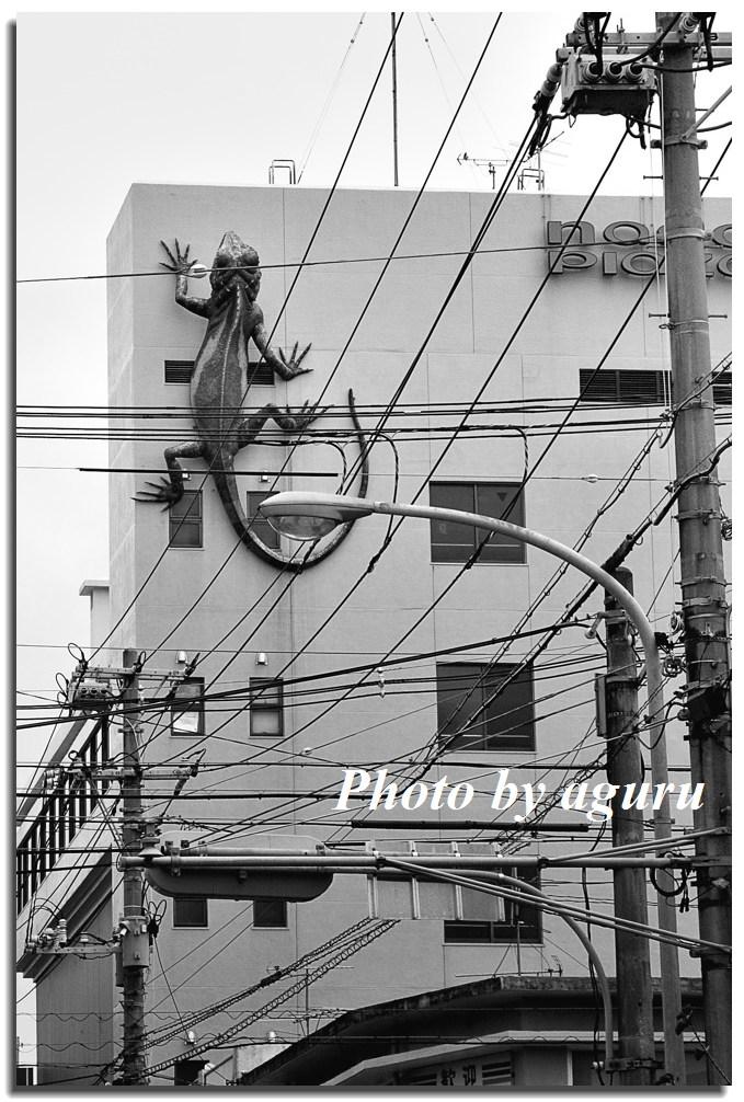f0160241_19523615.jpg