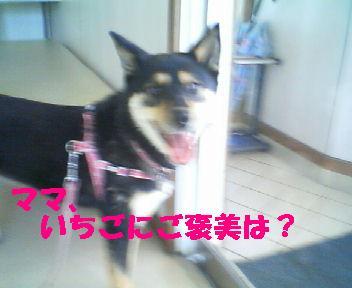 c0211642_17432567.jpg