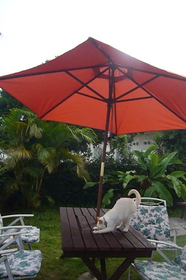 umbrella._c0153966_20495584.jpg