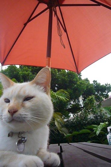 umbrella._c0153966_20514438.jpg
