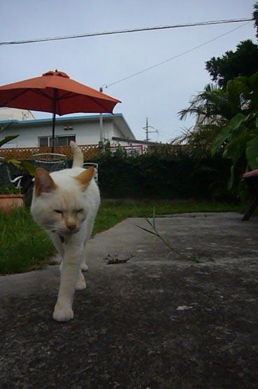 umbrella._c0153966_2053106.jpg