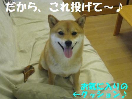 c0171368_21452377.jpg