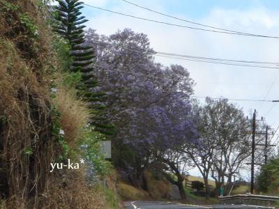f0194769_16221736.jpg