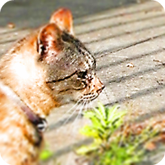 虎縞の横顔_f0235201_2247201.jpg