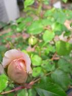 f0139405_2011989.jpg